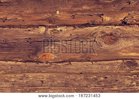pine wooden logs with traces of damage by bark beetle / old wood texture