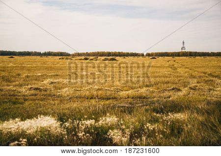 Wheat field and haystacks in front of forest. Rural landscape.