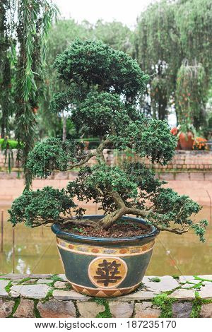 Traditional Japanese bonsai trees in the park. Bonsai in a park in Vietnam. Pond on background. Dalat city South Central Highlands of Vietnam