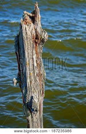 Putrid tree on the water background. Old jetty