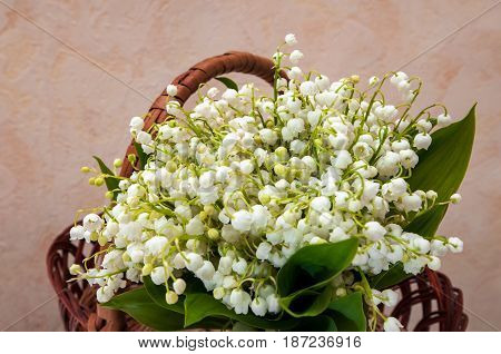 Fresh wild lilies of the valley in basket