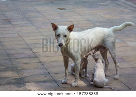 White dog and two baby under sun light