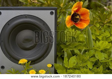 Cropped photo of a subwoofer in an open air party