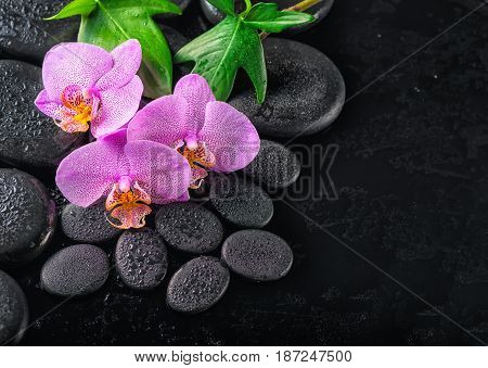 Top View Of Beautiful Spa Concept Of Blooming Twig Lilac Orchid Flower, Green Leaves With Water Drop