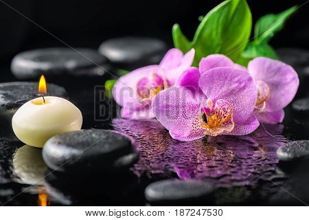 Beautiful Spa Concept Of Blooming Twig Lilac Orchid Flower, Green Leaf, Candle With Water Drops And