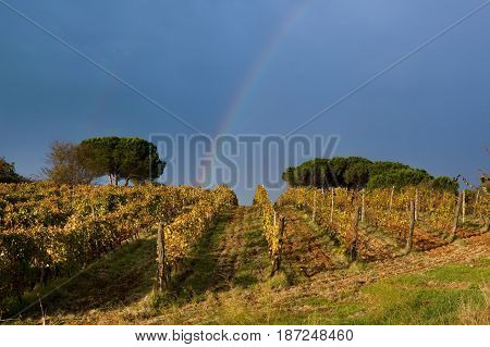 The Rainbow After The Storm In Tuscany