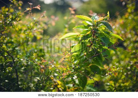 Bright glade with wild flowers, grass and dew