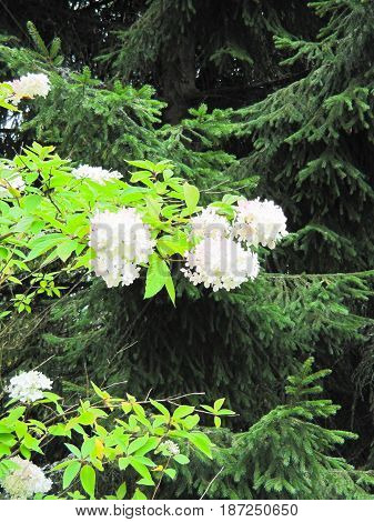 background of white flowers on a background of the garden