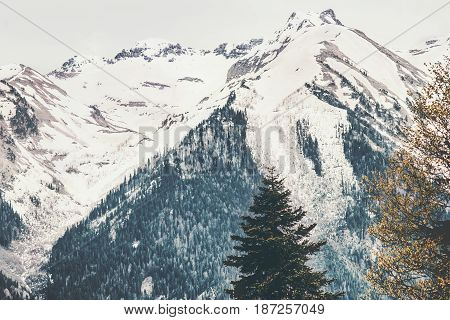Snowy Mountains and coniferous forest Landscape Travel view serene scenery wild nature calm summer atmospheric scene