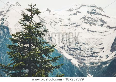 Forest snowy Mountains moody Landscape Travel aerial view serene scenery wild nature calm summer atmospheric scene