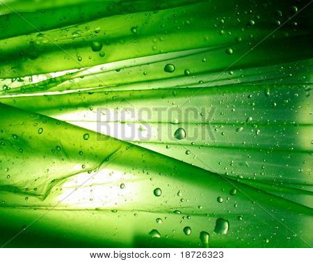 green background with water drop