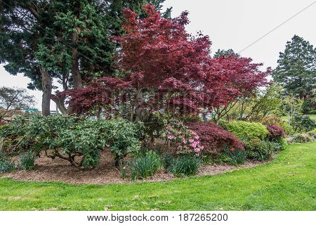 A view of trees and flowers at Hamilton Viewpoint Park in West Seattle Washington.
