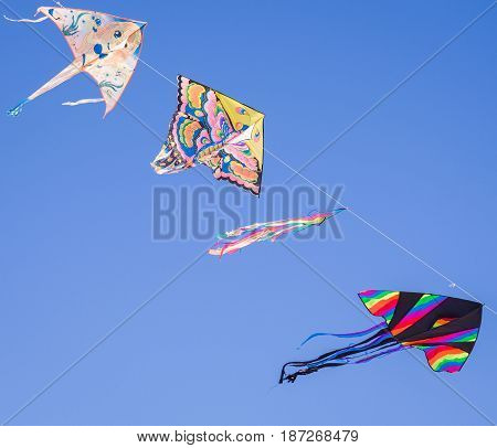 Chioggia Italy - April 30 2017: Colored kites fly in a row in the blue sky hanging on one strand.