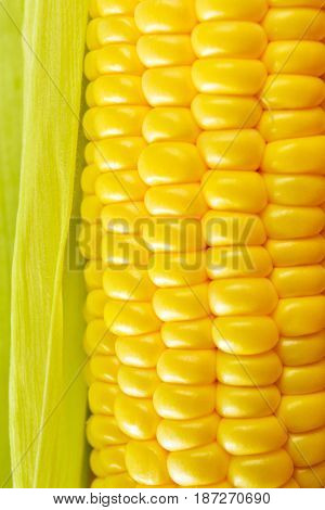 Ripe golden sweet corn close-up, vertical image
