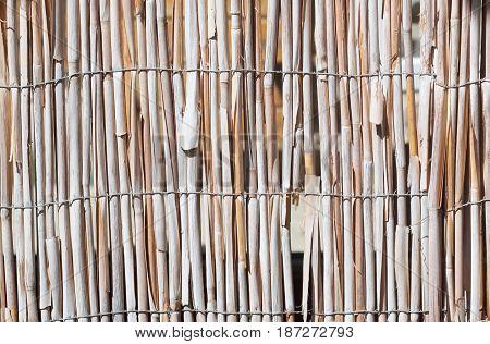 Bulrush Wall