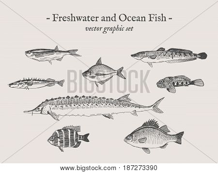 Freshwater and Ocean fish vintage vector illustration drawings set