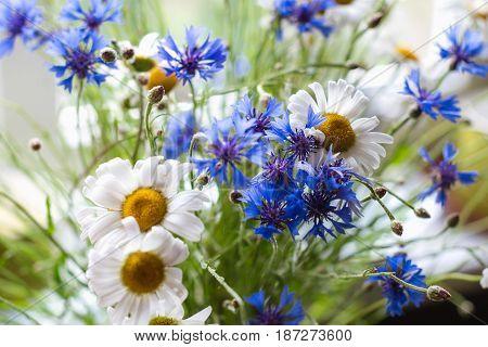 fresh flower bouquet of daisies and cornflower