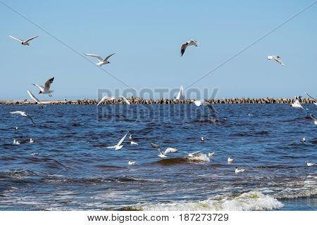 baltic sea breakwater and flying a lot of gulls
