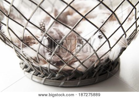 Different Bird Feathers in an open Iron Bowl placed on a white surface.