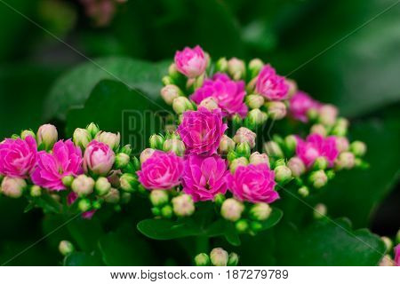 Flora background of pink flowers of green plants