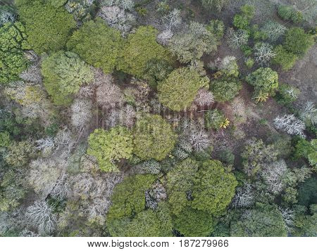 Nature Forest Background Aerial View