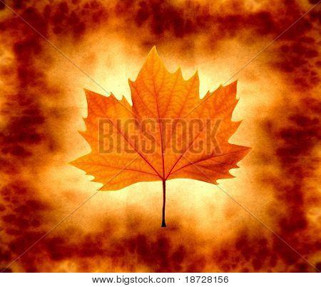 grunge autumn leaf