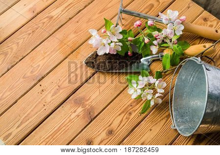 Branch of blossoming apple and garden tools on a wooden surface close-up