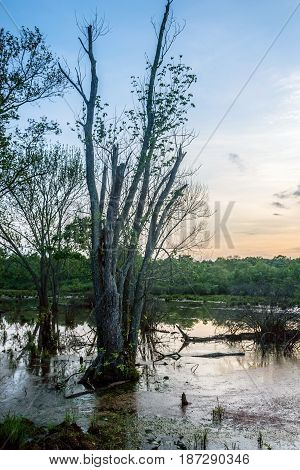 A wetland with trees at dusk in Englishtown New Jersey.