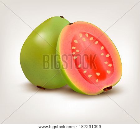Fresh green sweet Guava fruit. Vector illustration.