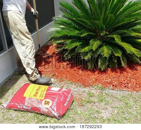 A man rakes mulch for a flower garden to conserve moisture, control weeds, and insulate plants. Another bag of mulch is nearby as he prepares the bed.