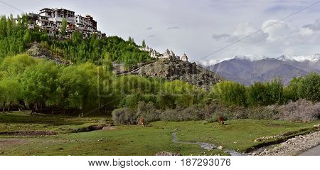 Buddhist Monastery Masho: On The Top Of The Hill Among The Green Trees Stands The Ancient High Tibet