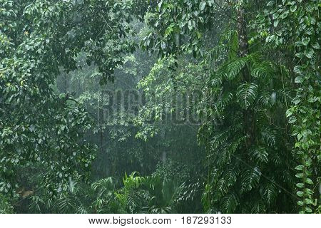 heavy rainfall in the jungle, evergreen tropical jungle, rainforest