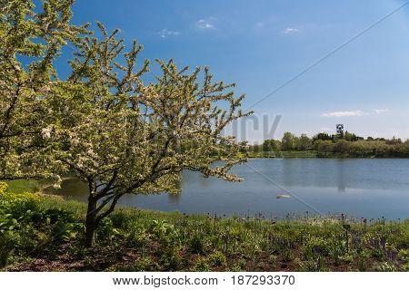 Beautiful Lake In A Botanic Garden In Chicago