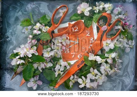 Art still life with two large orange scissors and square orange flowers among fresh apple tree flowers in water with paint divorces the original painting for interior design.