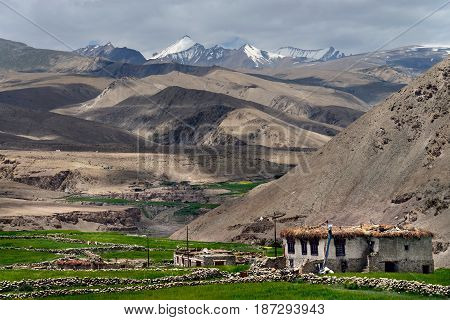 Traditional Tibetan house in a Buddhist village in Ladakh: a stone shack in the foreground centered green barley fields all at the foot of the highest mountain ranges the Himalayas India.