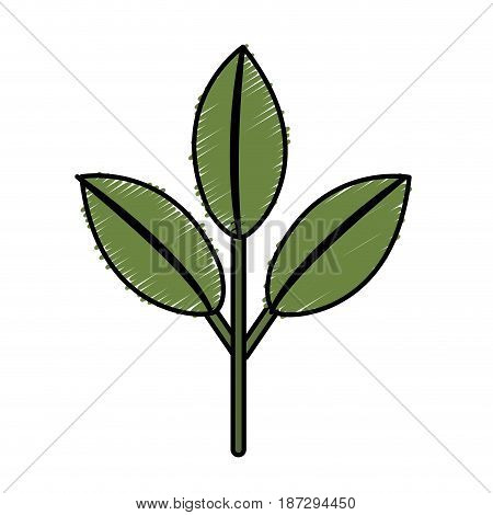nice ecology plant with leaves, vector illustration design