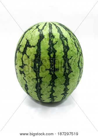 Fresh Organic Summer Watermelon Upright on Display