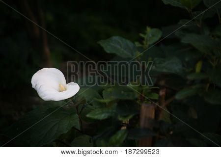 çiçek doğa bitki manzara yaz mevsim ot ağaç