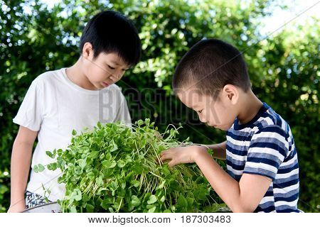 Asian Boy Interesting At Young Seedling