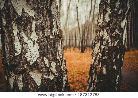 Autumn Forest. Walking in the wood. Trees in Siberia.