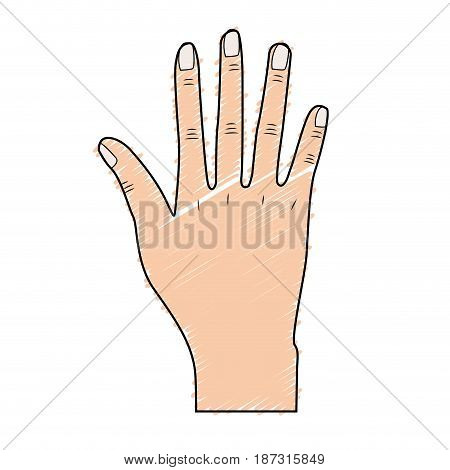 nice hand with all fingers and nails, vector illustration