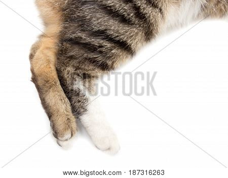 Paws of a cat on a white background .