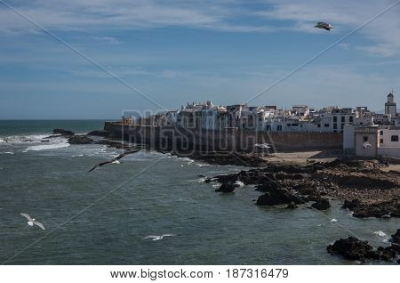 View To Essaouira Old City Rampant And Ocean From Scala Du Port ( Northern Skala ) Fort With Seagull