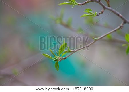 Branch of a tree with green leaves. Spring comes. Blurred background.