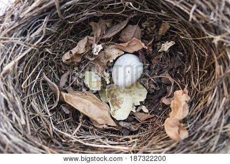 Black bird nest with one intact egg and one broken