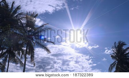 Silhouette coconut tree against with blue sky and white cloud with sun ray light.