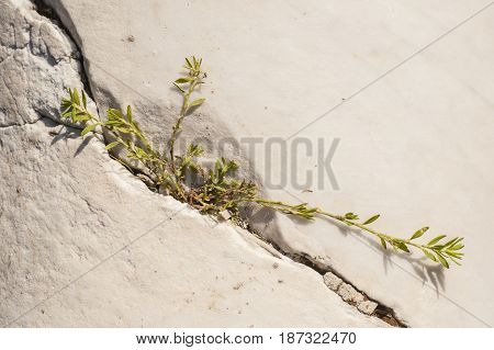 Power of Green plant growing in rock crack