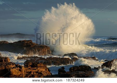 Seascape with large breaking wave on coastal rocks, South Africa