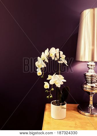 White orchid and metal lamp decorating interior in purple tones.