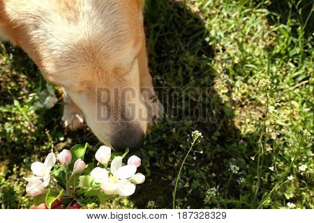 Cute funny dog smelling flowers outdoors